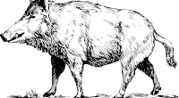 猪イノシシ
